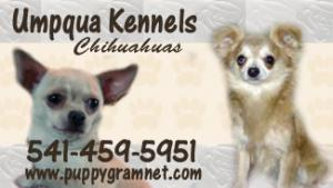 Chihuahuapupsreadynow