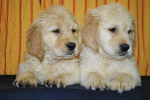 PuppiesforSale