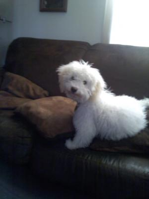 PuppyPoodle