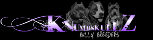 UKCRegBluePitBullPuppies